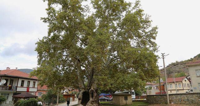 Çınar: The heritage of an Ottoman dream