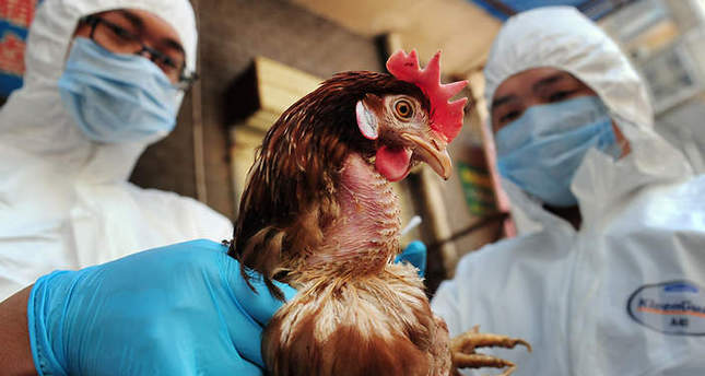 Germany reports first case of bird flu strain in Europe