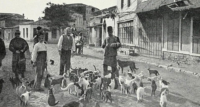 The Ottomans' exemplary treatment of street animals