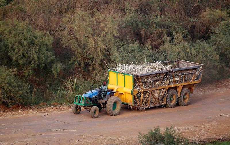 A man drives a tractor to transport sugarcanes from farms to a sugar factory in Mumias in western Kenya  Photo: Reuters
