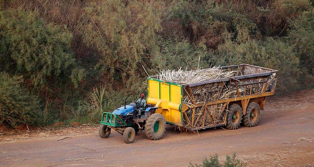 A man drives a tractor to transport sugarcanes from farms to a sugar factory in Mumias in western KenyaemPhoto: Reuters/em