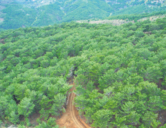 Forested areas of Turkey increasing