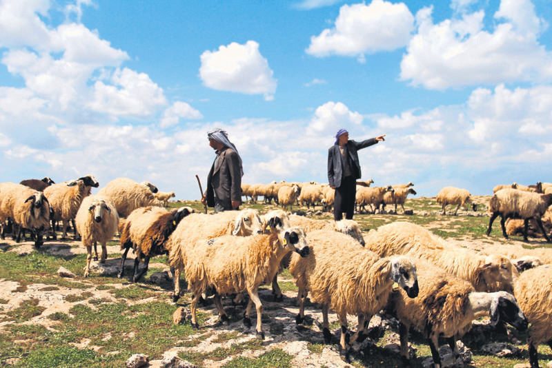 Nomads depend on security to take their livestock to the pastures in the mountains that have been harboring PKK members for decades.