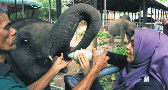 Elephant orphanage attracts tourists in Sri Lanka