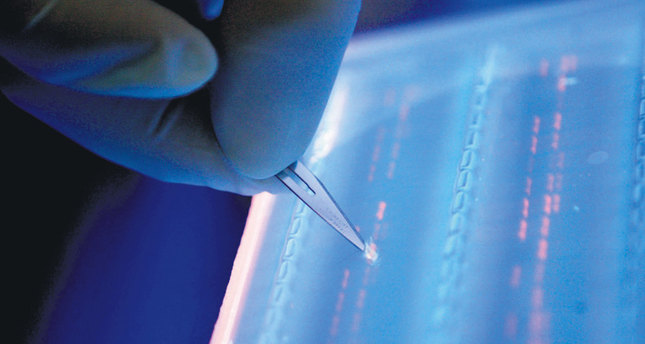 The human genome is the full complement of DNA, or genetic material, a copy of which is found in nearly every cell of the body.