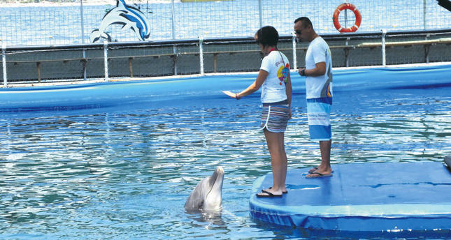 Activists stage demo against dolphin show in Marmaris