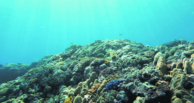 Trouble looms as warmer oceans push marine life toward the poles