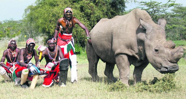 Kenya's Maasai warriors fight to save last white rhinos