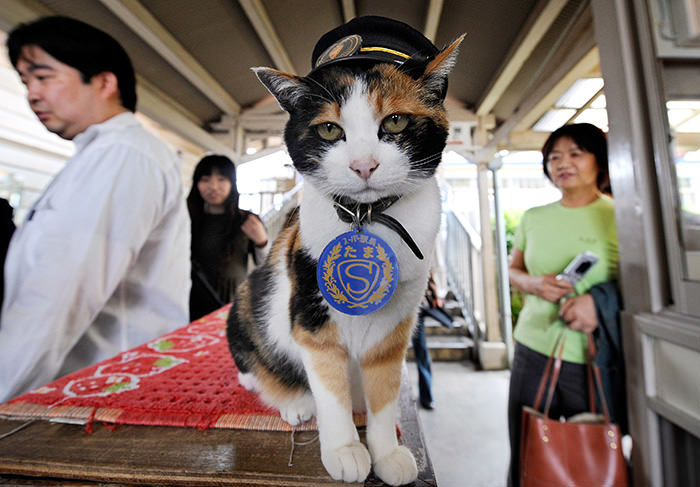 Photo from 2008 shows a female cat named ,Tama,, known as cat stationmaster of Wakayama Electric Railway, at Kishi station on the Kishigawa line in the city of Kinokawa, in Wakayama prefecture, western Japan (AFP Photo)