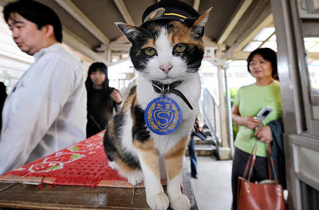 Photo from 2008 shows a female cat named Tama, known as cat stationmaster of Wakayama Electric Railway, at Kishi station on the Kishigawa line in the city of Kinokawa, in Wakayama prefecture, western Japan AFP Photo
