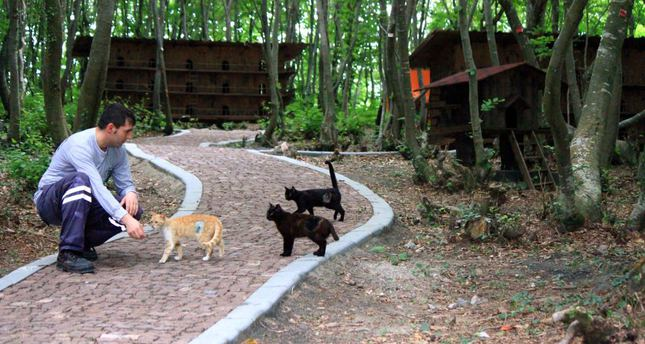 'Cat town' established for stray cats