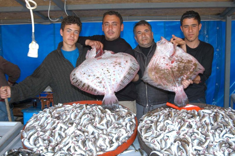 Fishermen in city of Zonguldak displaying large flatfish they caught. Flatfish is among the species at the risk of extinction in Turkey due to overfishing.