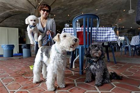 In this May 19, 2015 file photo, Michelle Vargas, with, from left, 8-year-old Bichon Frise-Poodle mix, 11-year-old Terrier , and 10-year-old Shih Tzu-Poodle mix , visit a cafe in New York. (AP Photo)