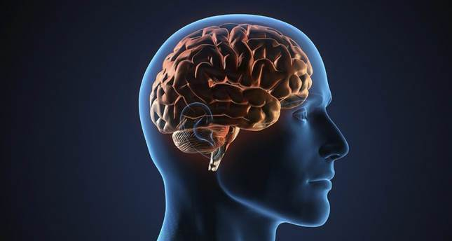 New study debunks common myths of male, female brains
