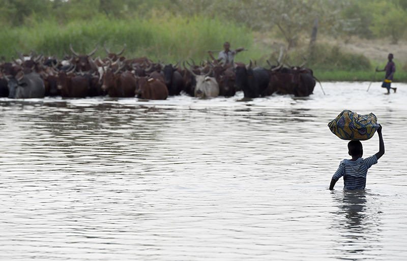 A picture taken on March 30, 2015 shows a boy carrying a bundle on his head as a man herds cattle across a section of Lake Chad (AFP photo)