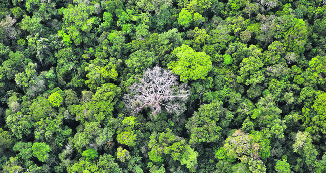 The Amazon Forest has been shrinking since the 1950s as people cut and burn areas for farming, ranching and development. Until now, there has been no reliable estimate of how many tree species  were threatened with extinction.