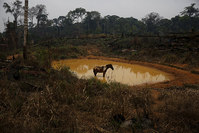 A horse stands by a lake in Rio Pardo next to Bom Futuro National Forest, in the district of Porto Velho, Rondonia State, Brazil, September 1, 2015 (Reuters Photo)
