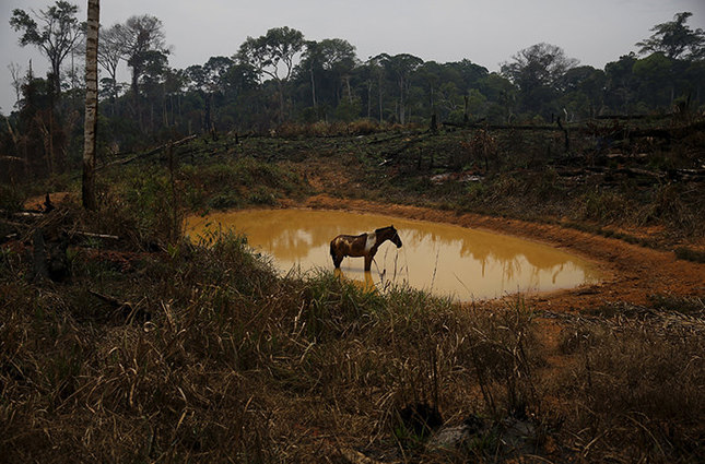 the destruction of the rain forests When we think of rainforests, most of us think of the tropics – those forests  between the tropic of cancer and tropic of capricorn, including south america.
