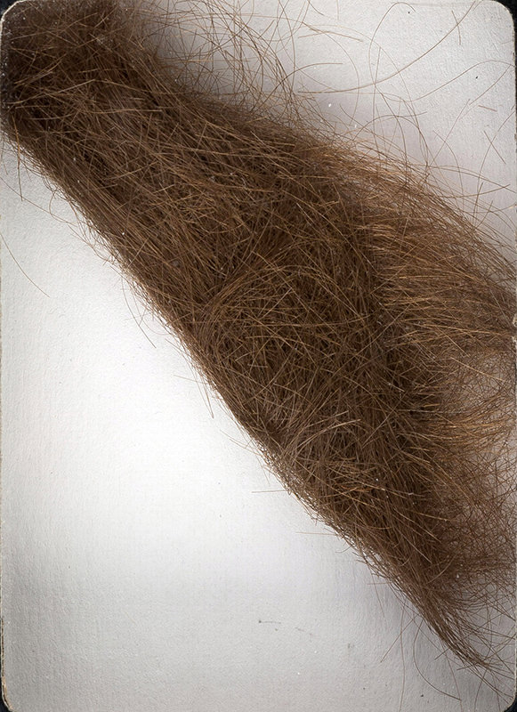 This photo provided by Heritage Auctions shows a 4-inch lock of hair that was collected by a German hairdresser who trimmed John Lennon's hair