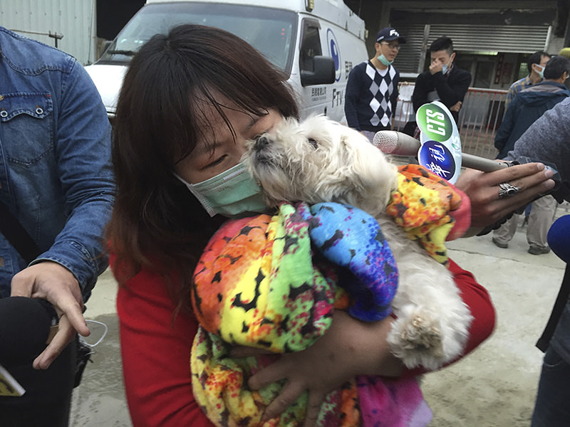 A rescued pet Maltese dog named Le Le, 7 years old, held by a relative of the owner after being rescued from collapsed building complex in Taiwan, Feb. 10, 2016 (AP)