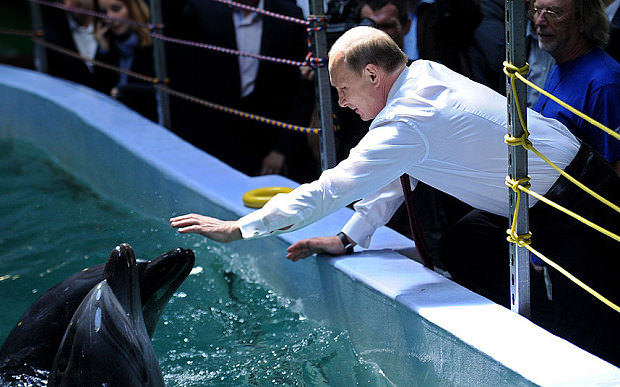 Vladimir Putin touches a dolphin in a Russian dolphinarium.  (AFP Photo)