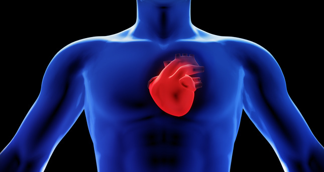 Scientists grow functional heart muscle in lab - Daily Sabah