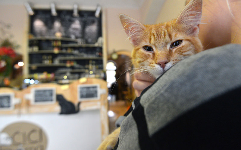 This file photo taken on March 13, 2016 shows a cat being held by a customer at the cat cafe Kocicí Kavarna, on March 13, 2016 in Prague. (AFP Photo)