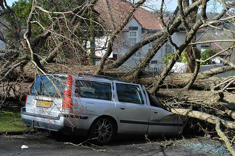 A tree that fell in high winds brought by Storm Katie lies across a car in a street in Brighton on March 28, 2016 (AFP Photo)
