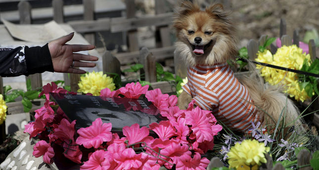 "Pet owner Qingqiu gestures to her dog, Little Huoban, after she swept the tomb of her previous dog Huoban, which means ""Buddy"" in Chinese, who died at the age of 15, ahead of the Qingming Festival at Baifu pet cemetery on the outskirts of Beijing."