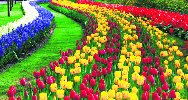 Istanbul comes alive as tulip festival gets underway