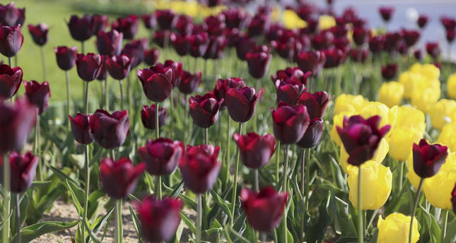 Time to capture colorful tulips in beautiful spots of Istanbul