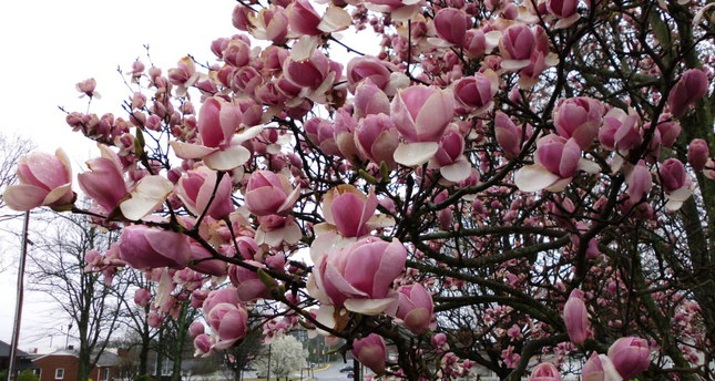 Top Tips For Viewing Spring Blossoms Around Istanbul Daily Sabah