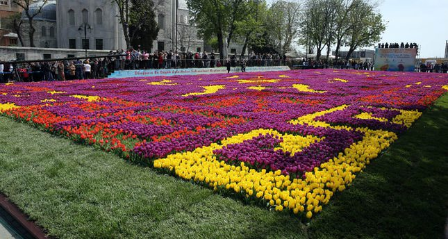 World's biggest 'tulip carpet' laid out in Istanbul