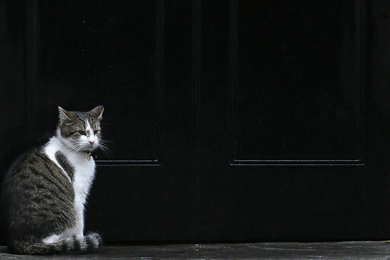 10 Downing Street cat Larry (AP Photo)