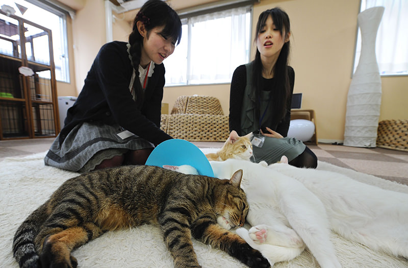 Japanese youths fondle cats at a 'cat cafe' in Tokyo on February 23, 2012 (AFP Photo)