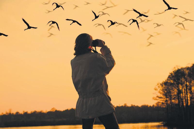 national parks bird watching ile ilgili görsel sonucu