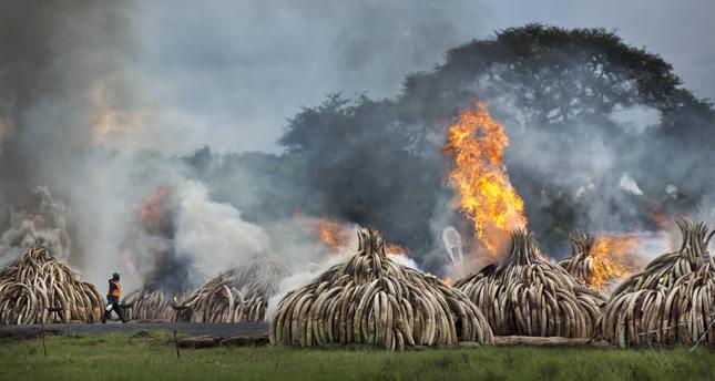 Kenya torches world's biggest ivory bonfire as it seeks ban on trade