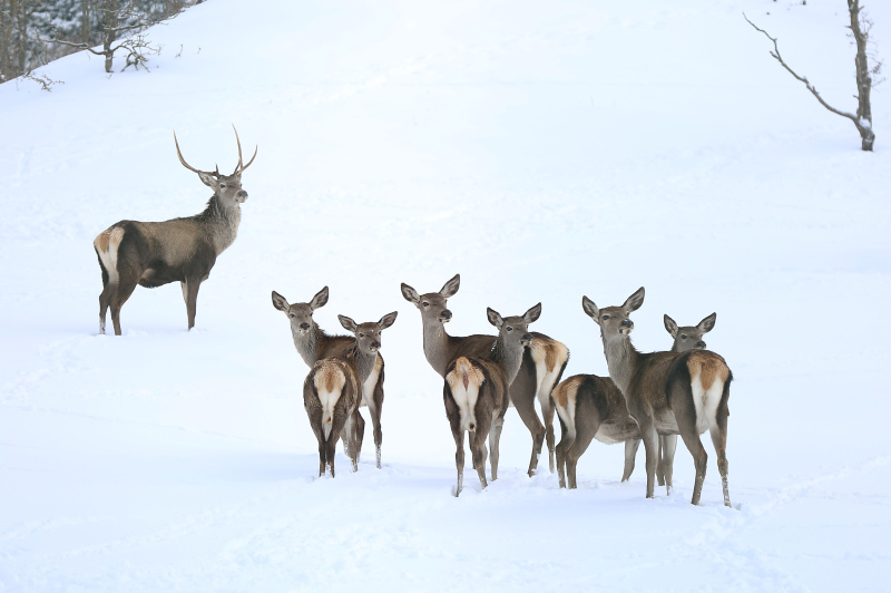 Winter beauties in Turkey's first fauna display area