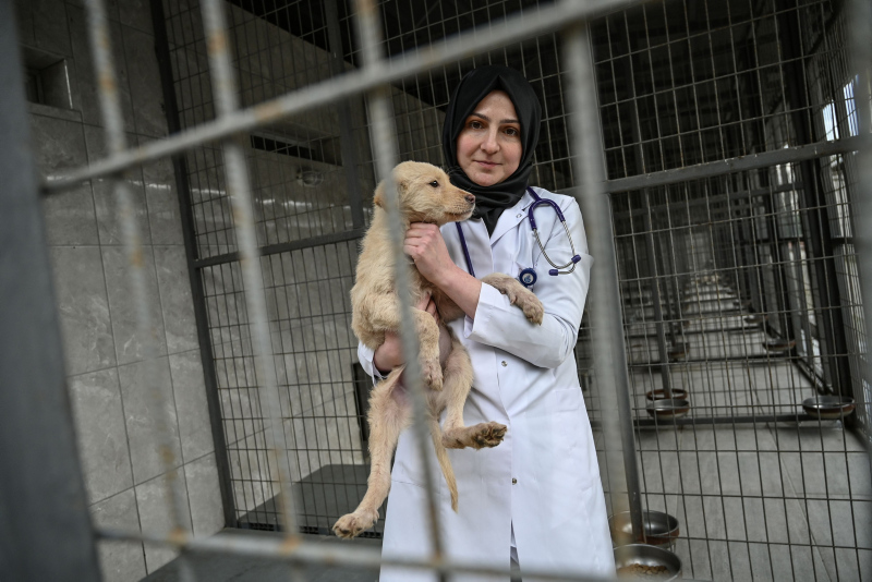 Tugce Demirlek, chief veterinarian of the Sultangazi Health Center poses with a stray dog on January 30, 2019 in Istanbul
