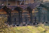 In Balıkesir/Sındırgı werden demnächst Getreidespeicher, die seit mehr als 200 Jahren gebraucht werden, dem Tourismus die Türen öffnen.   Die Speicher bestehen aus Besenkiefern, deren Bretter,...