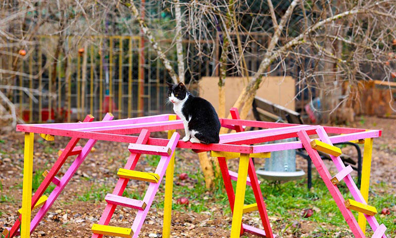 Welcome to purradise: Cat village in Antalya welcomes strays with playgrounds and villas