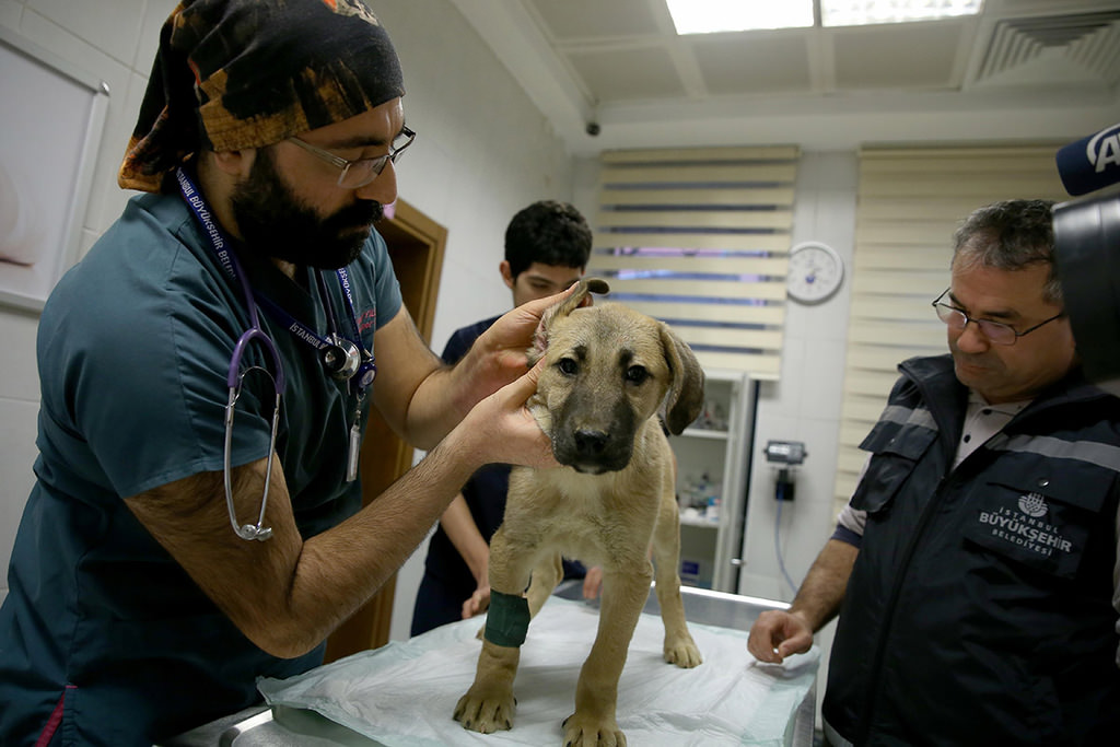 A dog's chance: Puppy stuck in Istanbul borehole rescued after 11 days