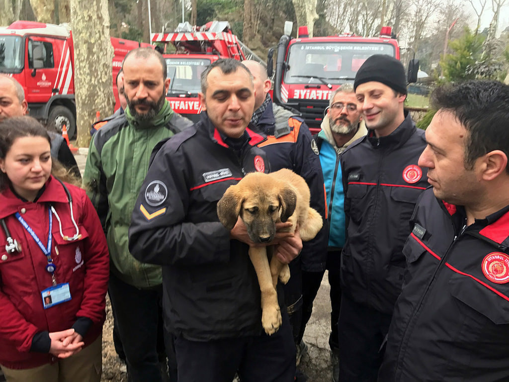 A dogu2019s chance: Puppy stuck in Istanbul borehole rescued after 11 days