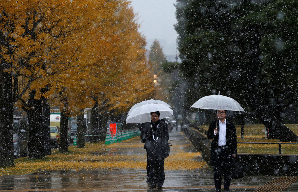Men walking near ginkgo trees during the first November snowfall in 54 years in Tokyo, at a park in Tokyo, Japan, Nov. 24, 2016. (REUTERS Photo)