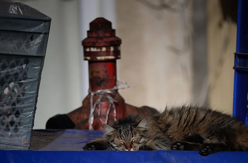 Street cats reign over Istanbul's Heybeliada in winter
