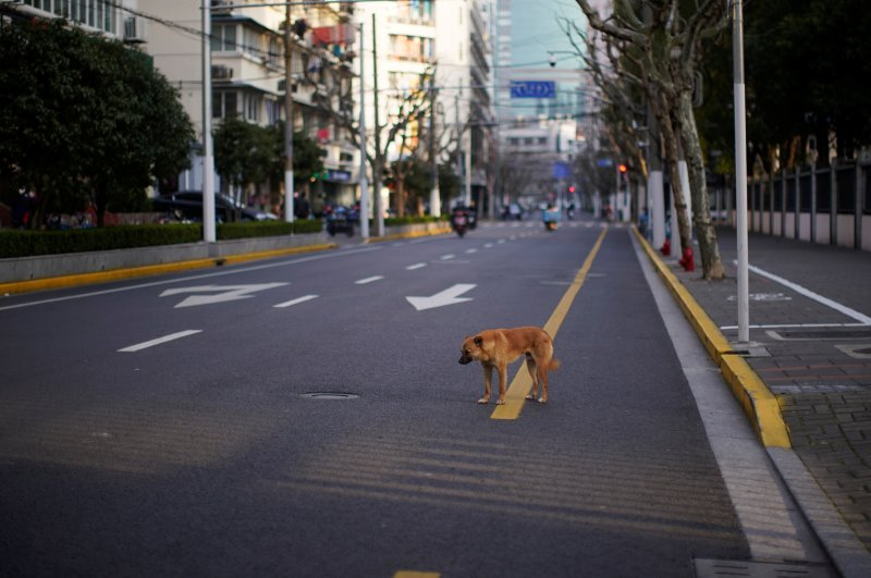A hungry stray dog walks on an empty street in downtown Shanghai, China, as the country is hit by an outbreak of the new coronavirus, Feb. 22, 2020. (REUTERS photo)