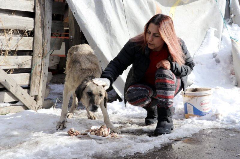 Nurten Tezer, a member of the Animal Rights Federation, feeds a dog in the central city of Sivas, Jan. 20, 2019. (AA Photo)