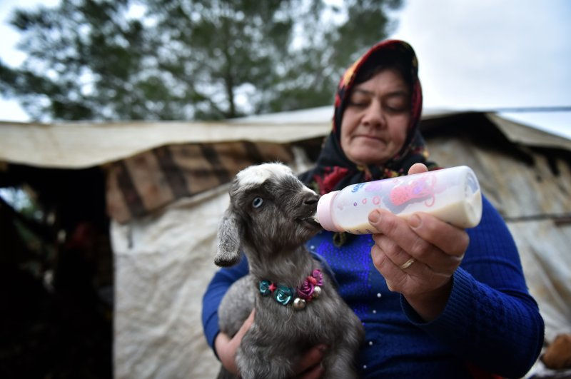 A Yörük woman feeds a lamb with a bottle. (AA Photo)