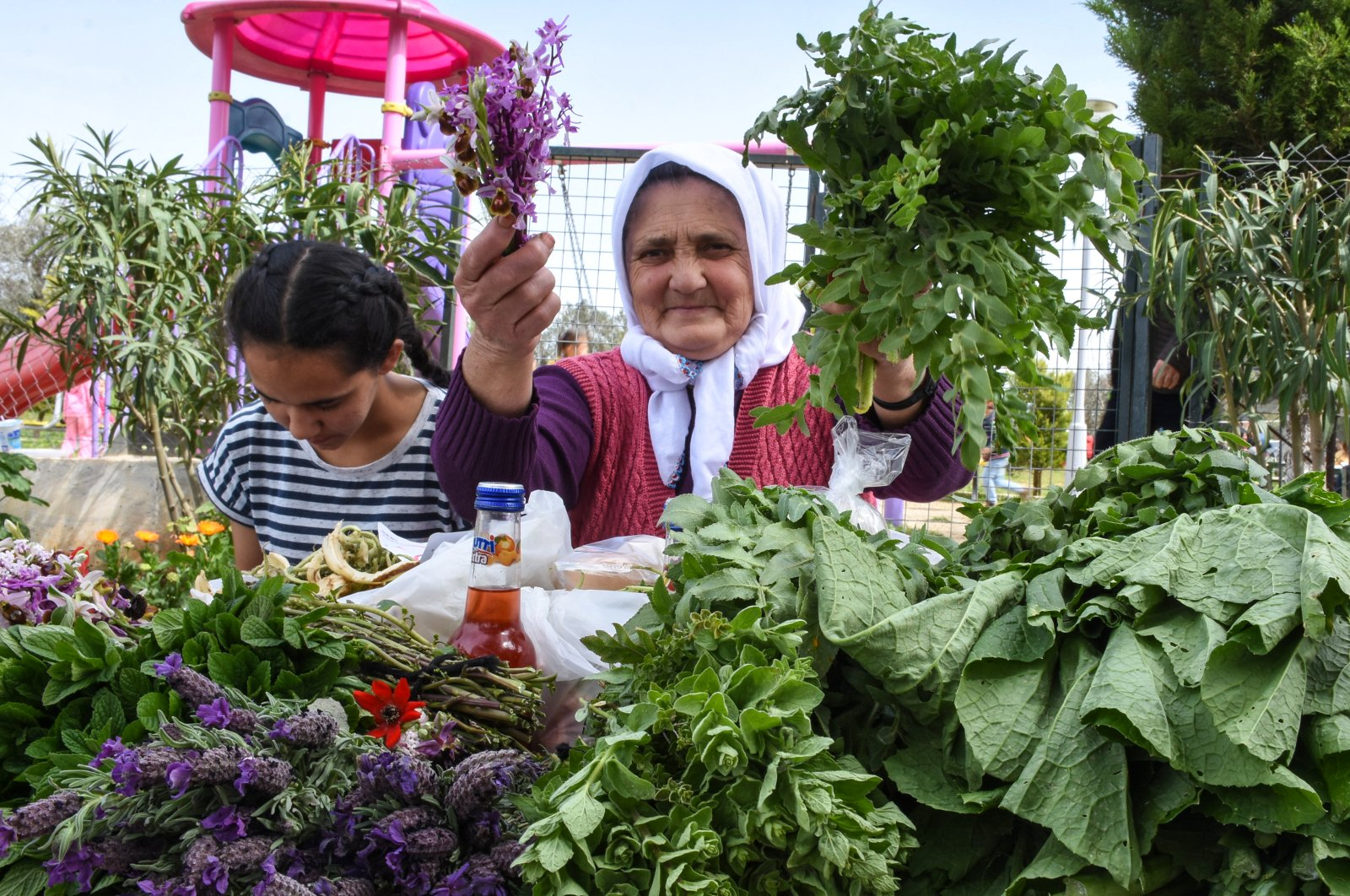 Streets in the center of the village of Ortakent in Bodrum will be lined with stands showcasing the wild greens and culinary traditions the Aegean area is famous for. (AA Photo)
