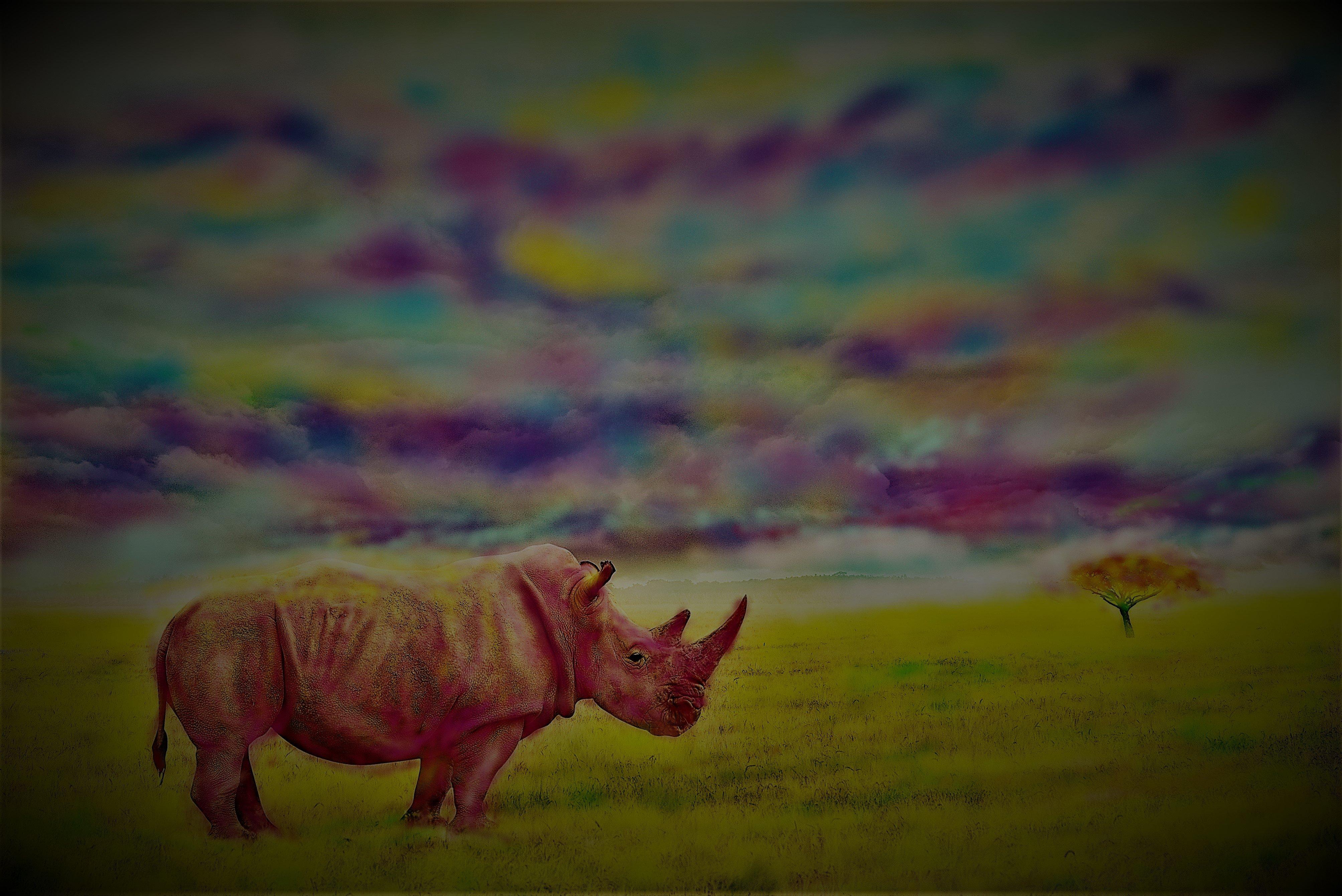 An untitled work by Özge Günaydın consisting of a 35-by-50-centimeter photo manipulation on plexiglass.